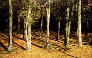 Fák az erdőn