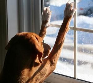 Kutya szilveszterkor a zárt lakásban