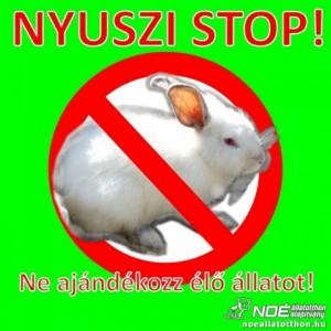 nyuszi_stop
