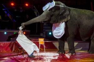 Borotváló elefánt
