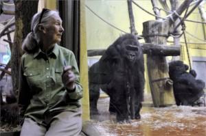 Godall a gorillákkal