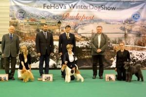 FeHoVa Kutyakiállítás