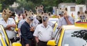 Taxis hiénák