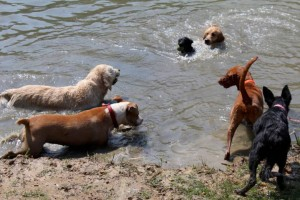 Kutyák a strandon