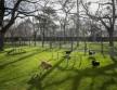 A kutyás élménypark átadásával több, mint 5000 négyzetméterrel bővült a park zöld területe
