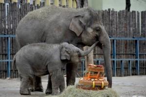 Asha és anyja, Angele a 3. születésnapon