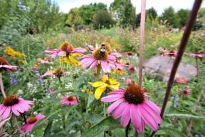 Ilyen egy bécsi rovarbarát kert