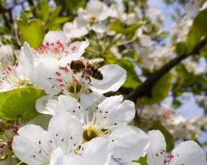 Méhecskék